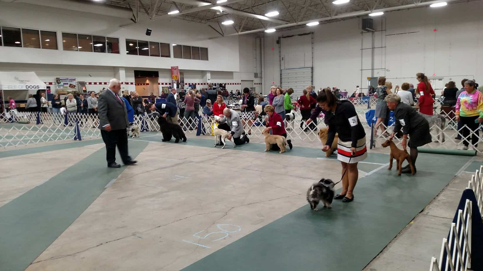 dog show puppy group